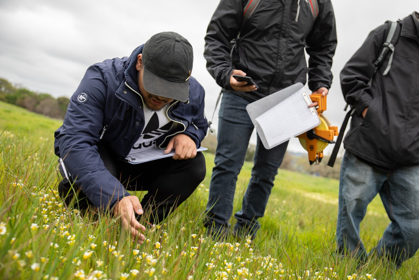 Students out in the field, checking grasses