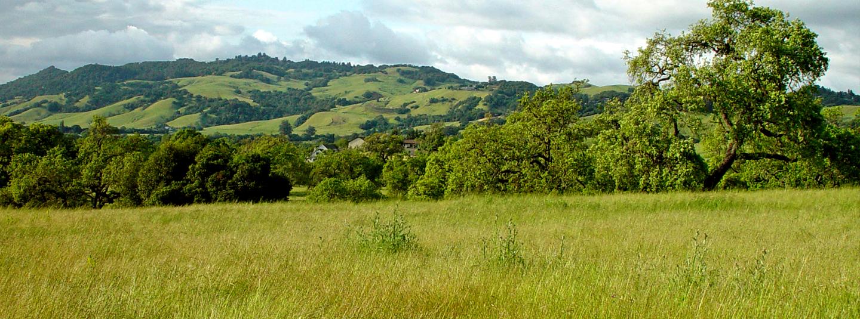 SoCo Hills